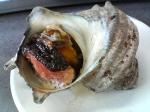 The humble sazae snail, before it turns 30