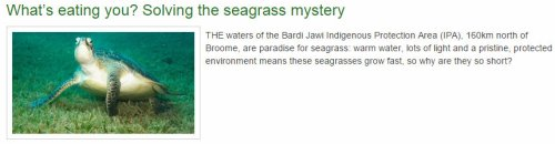 What's eating you? Solving the seagrass mystery