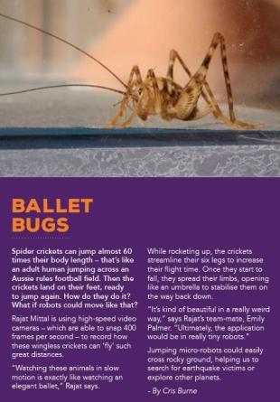 ballet bugs Helix