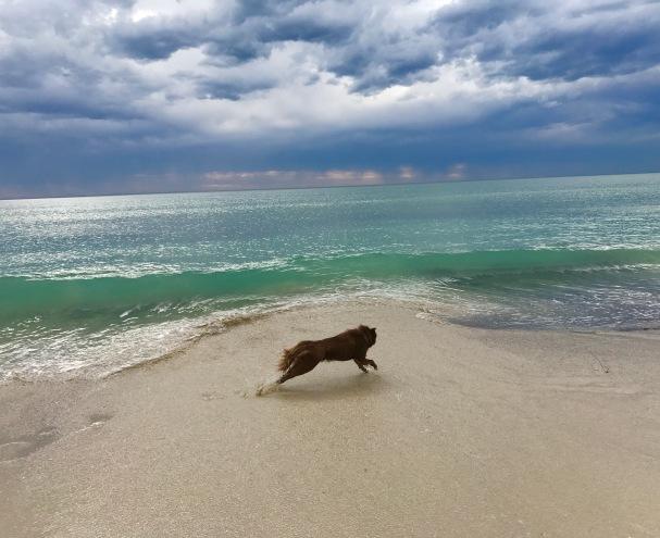 5 chasing waves
