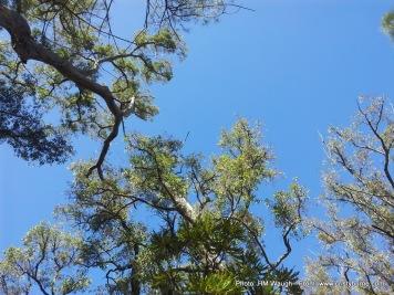 Blue sky WA Bibbulmun.jpg