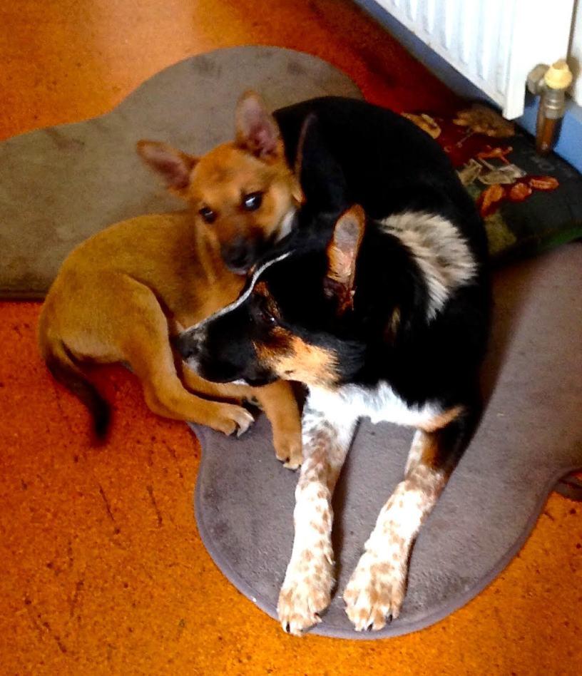 Pip and Benji