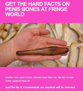 penis bone promo